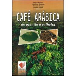 Café Arábica do plantio à colheita