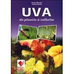 Uva do Plantio à Colheita